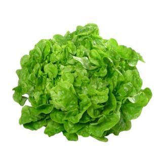 Salate, Eichblatt hell