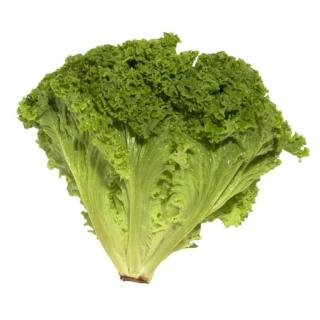 Salat, Lollo Biondo