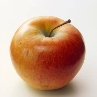 Apfel Holsteiner Cox