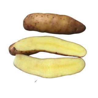 Kartoffel, Bamberger Hörnchen (festkochend)