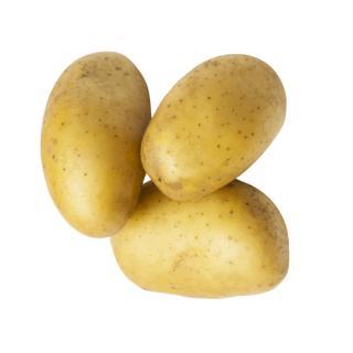 Kartoffel, Glorietta (festkochend )
