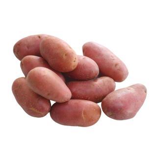 Kartoffel, Laura (leicht mehlig)
