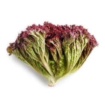 Salat, Lollo Rosso